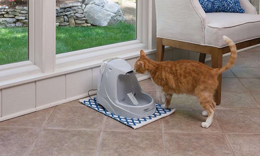 PetSafe Drinkwell Platinum Pet Fountain Review