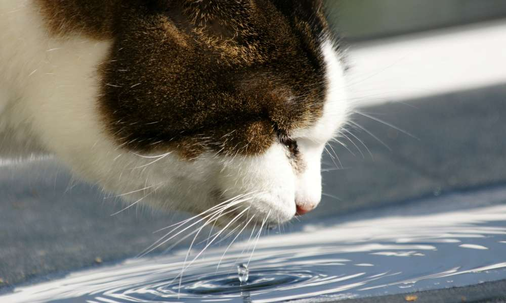 Reasons to Get a Cat Fountain